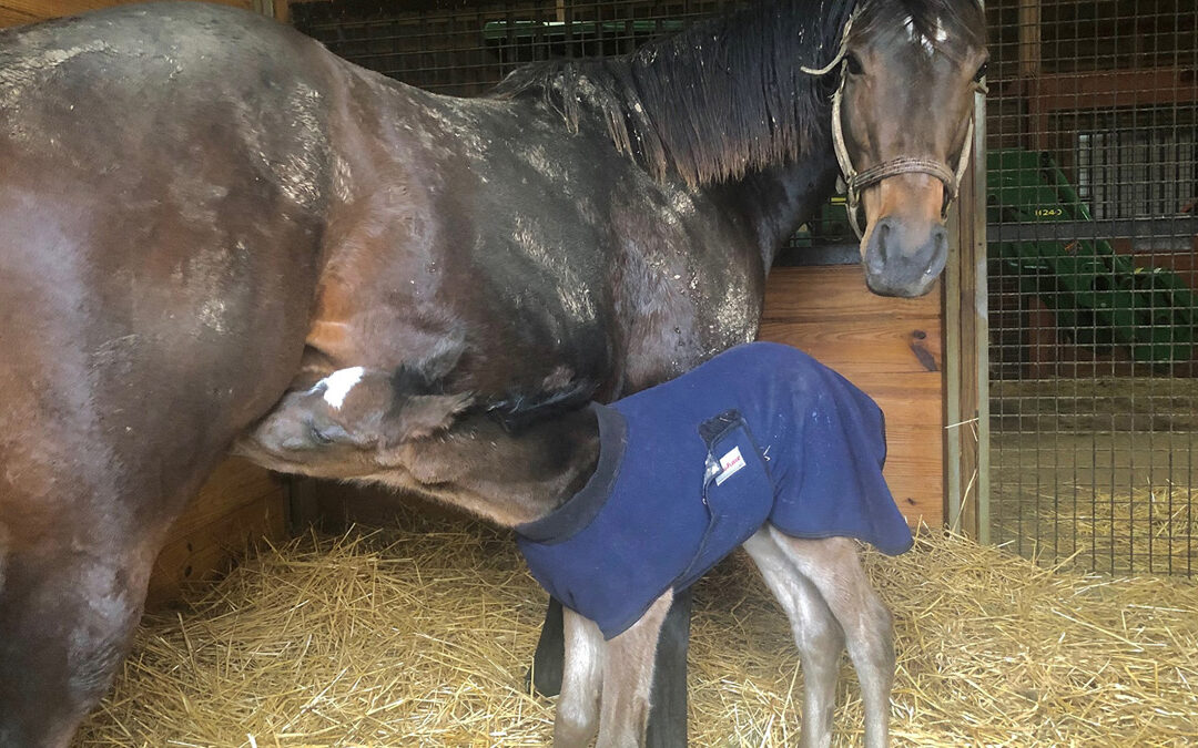 Meet Celtic Moonlight's foal, by Gainesway's Tapizar!